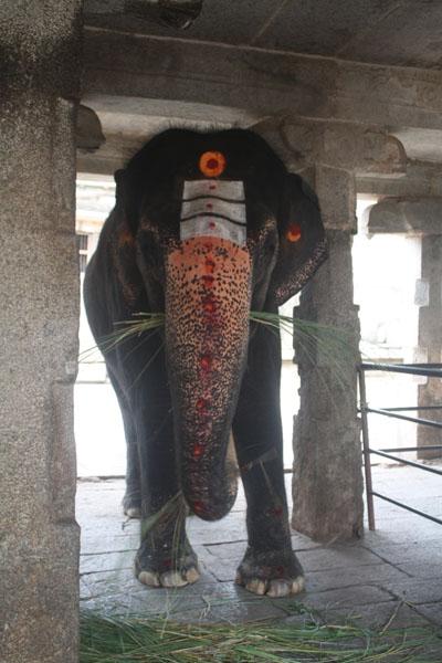 The Temple Elephant Lakshmi of Virupaksha Temple