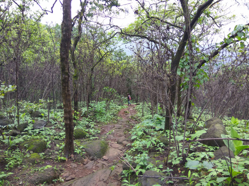 Jungle route during the Andharban trek