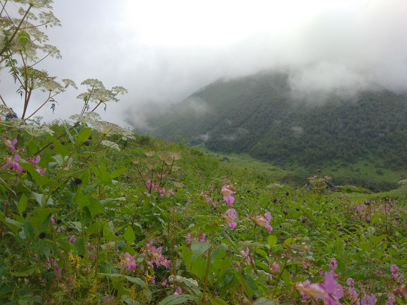 Valley Of Flowers : Trek Blog – II | Travel And Trekking