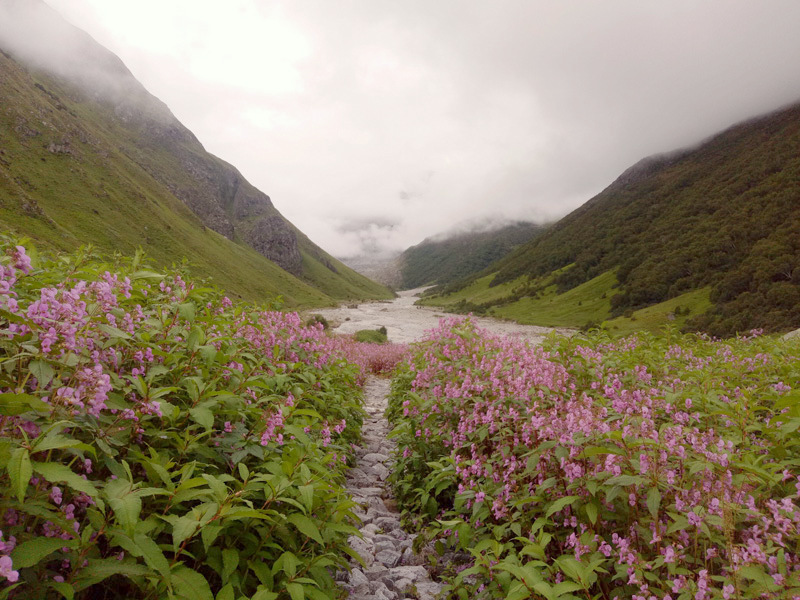 Valley Of Flowers : Trek Blog – I | Travel And Trekking