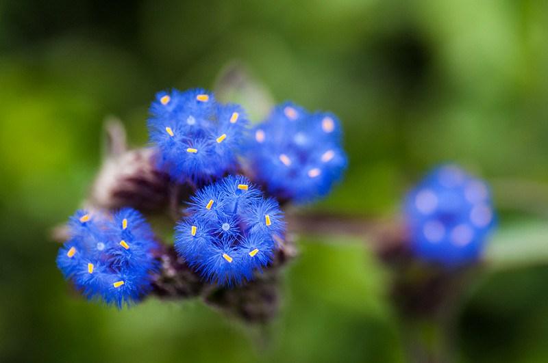 flowers in Kas pathar4