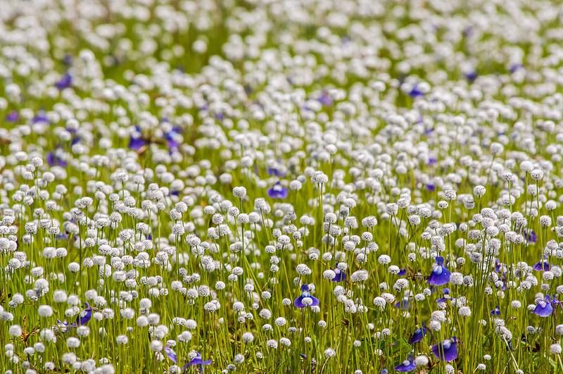 flowers in Kas pathar5