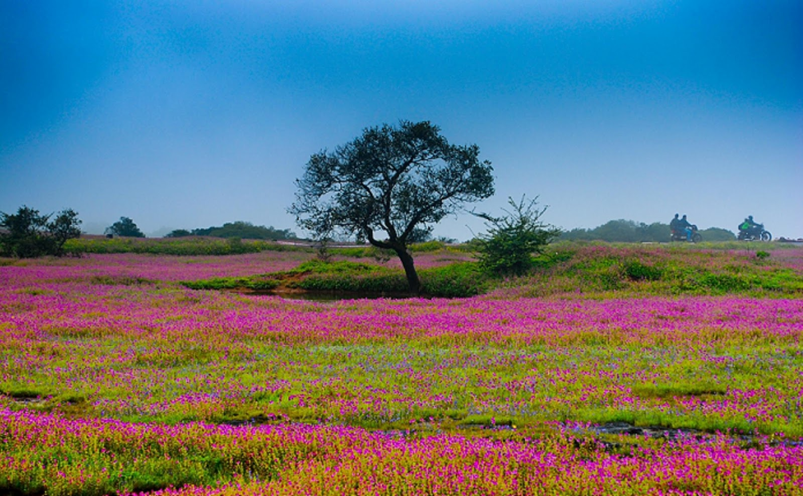 Kaas Plateau – Valley Of Flowers | Travel And Trekking