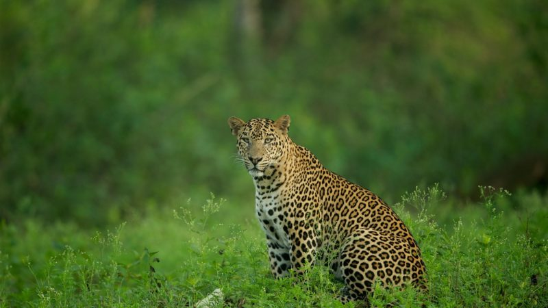 Kabini : Lesser Known Places Of Visit in Karnataka : Part X